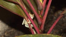 Dichte Omhooggaand van de boomkikker in wildernis stock fotografie