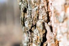 Dichte omhooggaand van de boomschors Stock Fotografie