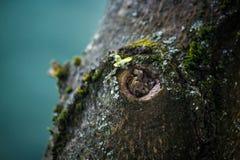 Dichte omhooggaand van de boomschors stock foto