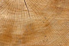 Dichte omhooggaand van de boomstam - 21 Stock Fotografie