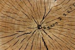Dichte omhooggaand van de boomstam stock foto's