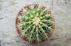 Dichte omhooggaand van de cactus Royalty-vrije Stock Afbeeldingen