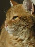 Dichte Omhooggaand van de kat Stock Foto's