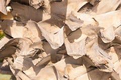 Dichte omhooggaand van de palmboomstam Stock Afbeelding