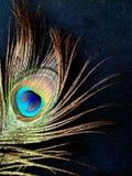 Dichte omhooggaand van de pauwveer geïsoleerd op een zwarte achtergrond royalty-vrije stock foto's