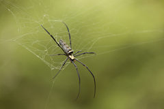 Dichte omhooggaand van de spin stock afbeelding