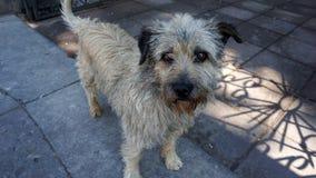 Dichte omhooggaand van de straathond Royalty-vrije Stock Foto's