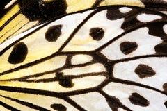 Dichte Omhooggaand van de Vleugel van de vlinder. stock fotografie