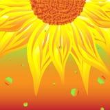 Dichte omhooggaand van de zonnebloem royalty-vrije illustratie
