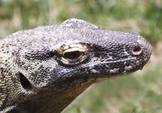 Dichte Omhooggaand van een Komodo-Draak Royalty-vrije Stock Afbeeldingen