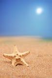 Dichte omhooggaand van een overzeese ster op een zandig strand Stock Foto's