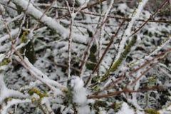 Dichte omhooggaand van een tak in de wintertijd Royalty-vrije Stock Afbeeldingen