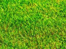 Dichte omhooggaand van het gras stock fotografie