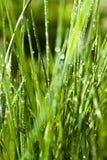 Dichte Omhooggaand van het gras met waterdalingen Stock Afbeelding