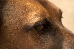 Dichte omhooggaand van het hondenportret Stock Foto's