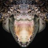 Dichte omhooggaand van het krokodilgezicht Stock Fotografie