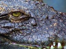 Dichte omhooggaand van het krokodiloog en gevaarlijk Stock Foto