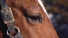 Dichte omhooggaand van het paardoog Langzame Motie stock videobeelden