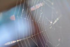 Dichte omhooggaand van het spinneweb Stock Foto's