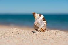 Dichte omhooggaand van Shell op een zandig strand, achtergrond Stock Fotografie