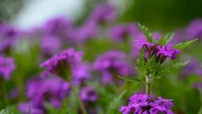 Dichte omhooggaand van sommige purpere wildflowers met grote velddiepte stock foto
