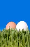Dichte Omhooggaand van Twee Bruine en Witte Eieren, Nestled in Groene Gra royalty-vrije stock afbeeldingen