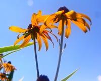 Dichte omhooggaand van zonnebloemmacrophotography Royalty-vrije Stock Afbeeldingen