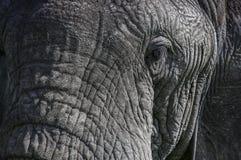 Dichte portait van een olifantsoog stock fotografie