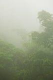 Dichte Tropische Wildernis in Mist stock foto's