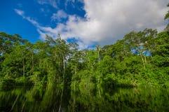 Dichte Vegetation auf Cuyabeno-Fluss innerhalb des Amazonas-Regenwaldes im Reserve-Nationalpark Cuyabeno-wild lebender Tiere, Süd Lizenzfreies Stockbild