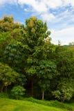 Dichte verschiedene Bäume gegen blauen Himmel stockfoto