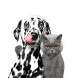 Dichte vriendschap tussen een kat en een hond Stock Afbeeldingen