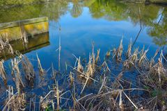 Dichte Waldszene im Frühjahr, Ufergegendfauna Stockfoto