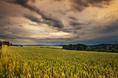 Dichte Wolken und Kornfeld Stockfotografie