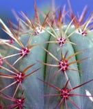 Dichte ziet omhooggaand van de cactus eruit stock foto's
