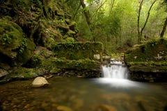 Dichter üppiger Wald und synthetischer Wasserfall Stockbilder