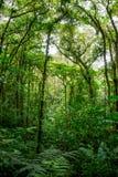 Dichter Dschungel mit vielen Bäumen Stockfoto