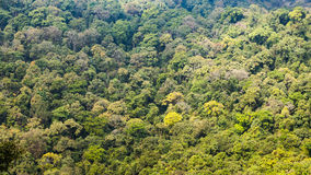 Dichter grüner Wald Lizenzfreie Stockfotografie