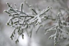 Dichter kijk aan de winter Koude, maar mooi Royalty-vrije Stock Afbeeldingen