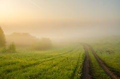 dichter Morgennebel im Sommerwald lizenzfreie stockfotos