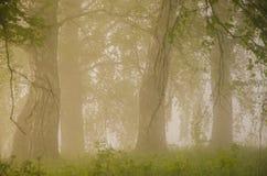 dichter Morgennebel im Sommerwald lizenzfreies stockfoto