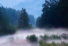 Dichter Nebel stockfotos