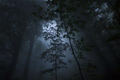 Dichter Nebel im beechen Holz stockbilder