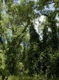 Dichter Wald lizenzfreie stockfotos