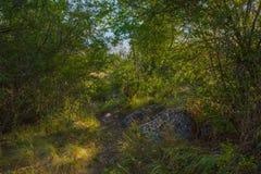 Dichter Wald, hohes Gras und Steine Schatten und Sonne Stockbild