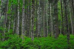 Dichter Wald mit grünen Büschen stockbild