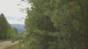 Dichter Wald, Schotterweg und Stück Berglandschaft mit Dorf fern stock video footage