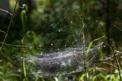 Dichtes Spinnennetz ausgedehnt zwischen Niederlassungen in einem Wald in der Swerdlowsk-Region lizenzfreies stockfoto