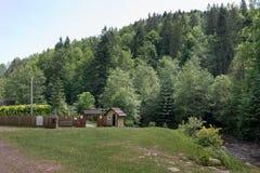 Dichtes und großes grünes Holz Stockfotografie