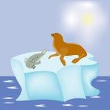 Dichtung auf Block des Eises Lizenzfreie Stockbilder